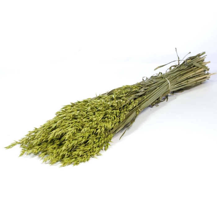 <h4>DRIED FLOWERS - HAVER (AVENA) SB GREEN</h4>