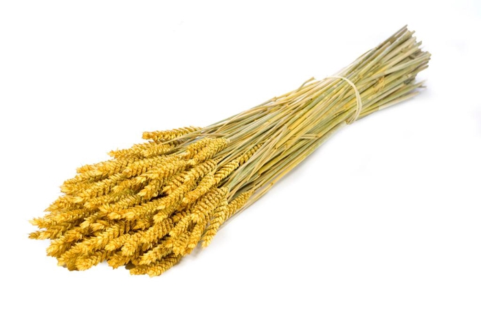 Tarwe (triticum) yellow
