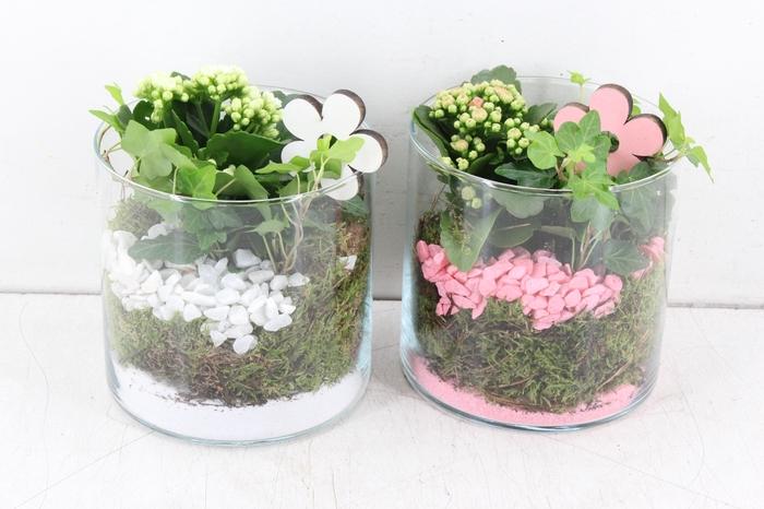 <h4>arr. PL - Glas cilinder 15x15 - roze/wit</h4>
