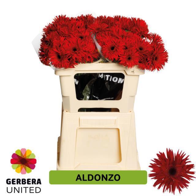 <h4>GE MS ALDONZO</h4>
