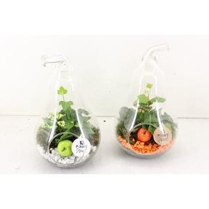 arr. PL - Glazen peer - oranje/wit