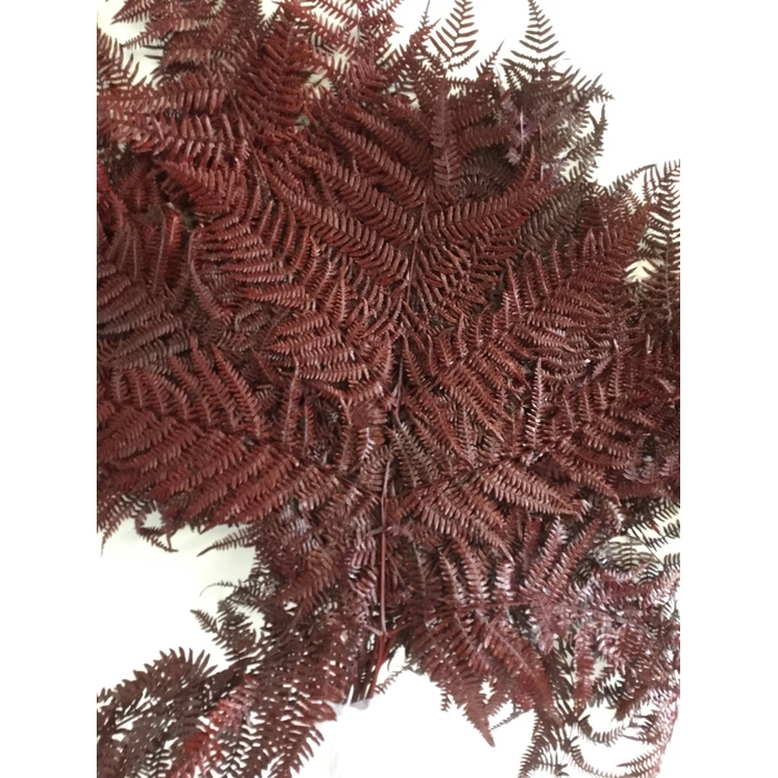<h4>DRIED FLOWERS - BRACKENFERN PRESERVED RED 10PCS</h4>