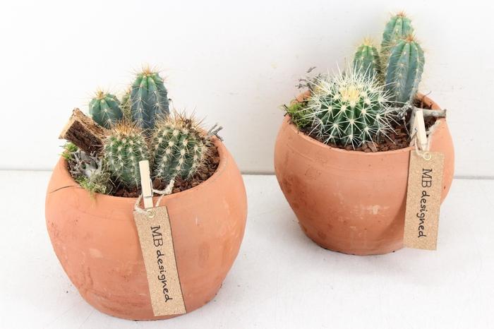 <h4>arr. MB Cactus - Bolpot terra cotta 403/3</h4>
