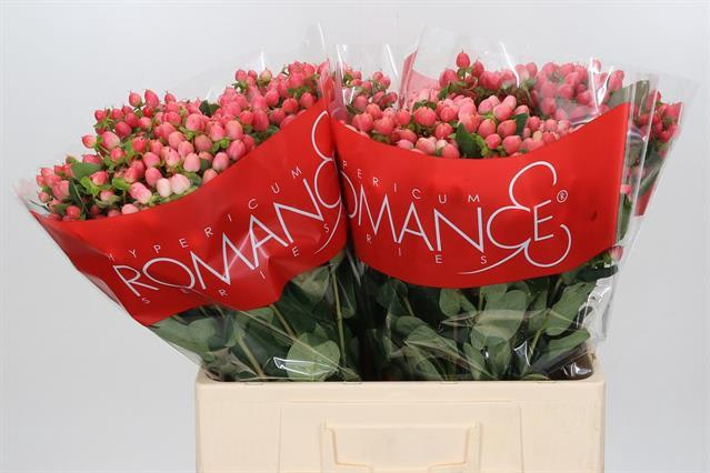 <h4>HYP SWEET ROMANCE</h4>