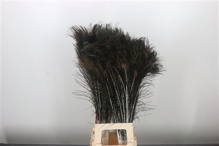 <h4>Dec Feather Peacock</h4>