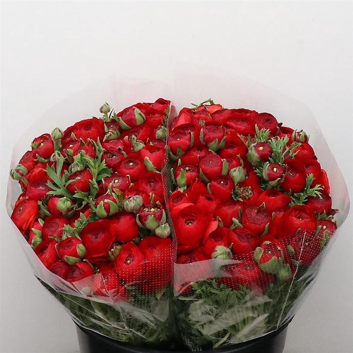 <h4>Ran Aazur Red Super (sal)</h4>