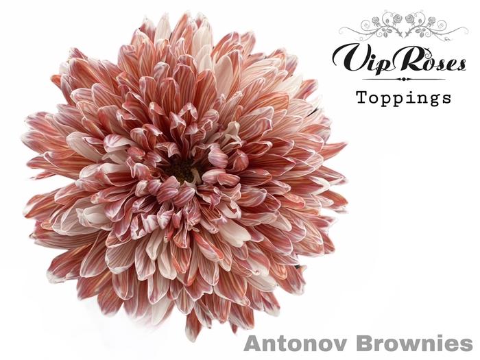 <h4>CHR G ANTONOV BROWNIES</h4>