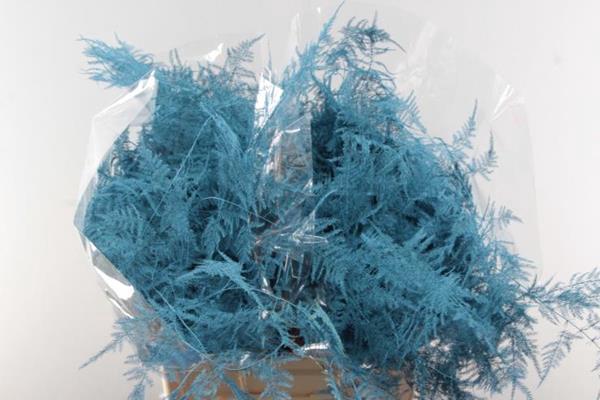 <h4>Asp Extra Veer Aqua Blauw</h4>