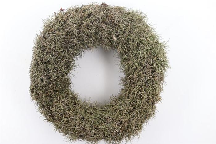 <h4>Wr Iron Bush Naturel 60cm</h4>
