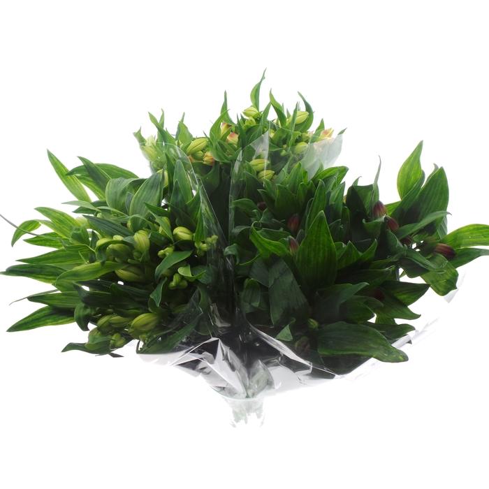 <h4>Bouquet Mono Alstro x10 mix 60cm</h4>