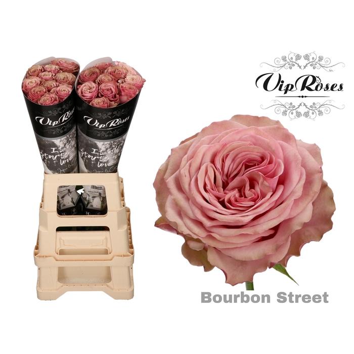 <h4>R GR BOURBON STREET x 20</h4>