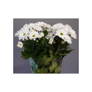 Chrysanthemum spray Chic White