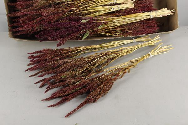<h4>Df Amaranthus Red 40gr Bs</h4>