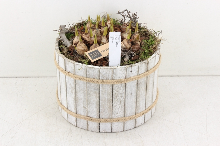 <h4>arr.. Muscari MB - Hout ton XL white</h4>