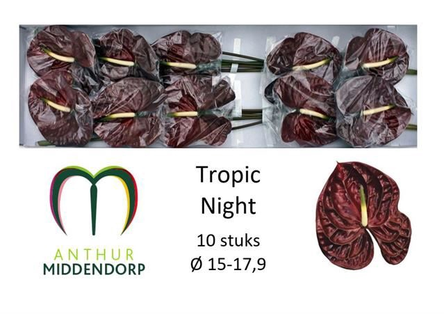 <h4>Anth Tropic Night</h4>