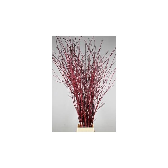 <h4>Cornus Rood Vertakt 190-200cm</h4>