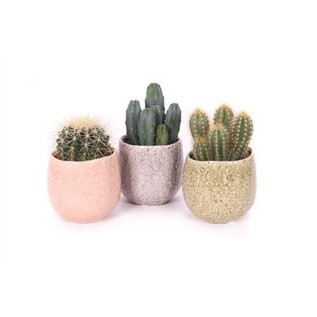 <h4>Cactus 8,5 Cm In La Quinta Keramiek</h4>