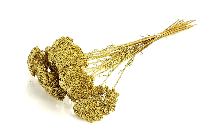 <h4>Achillea per stem Gold</h4>