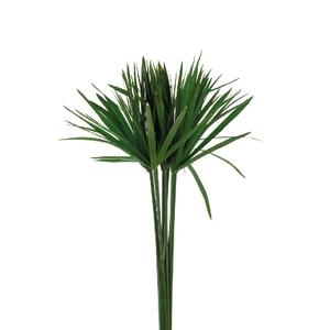 Papyrus Green