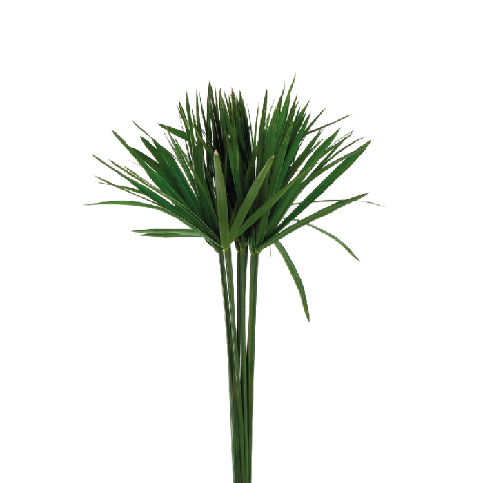 <h4>Papyrus Green</h4>