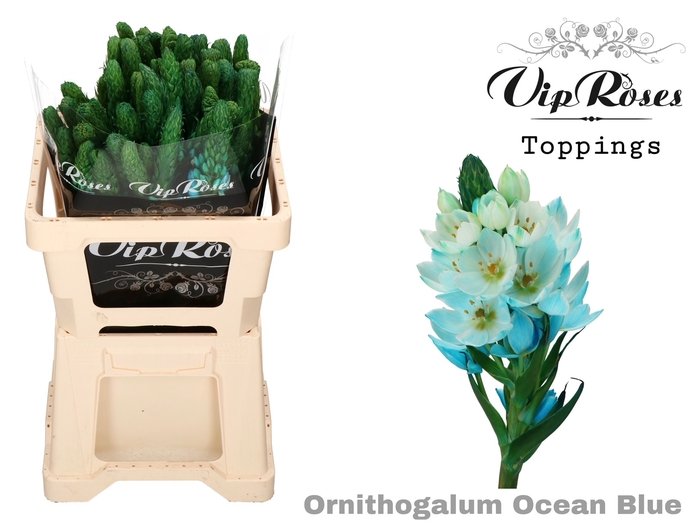 ORNIT THY OCEAN BLUE L50