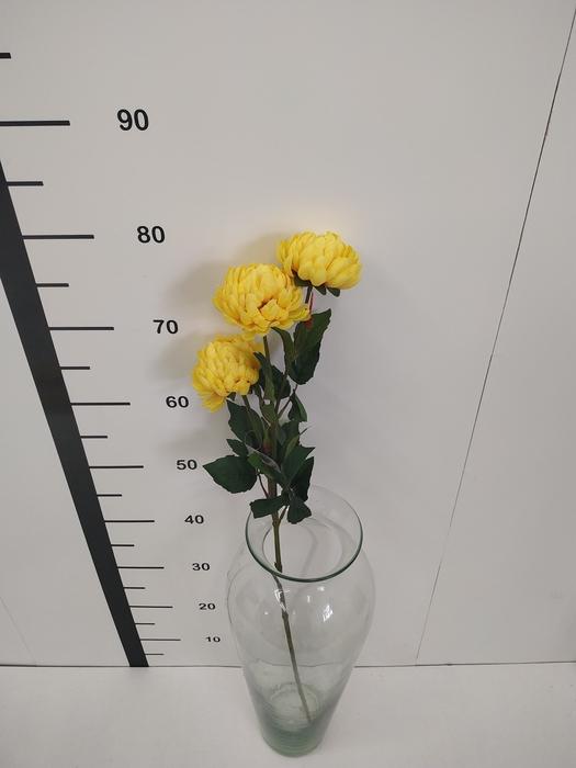 <h4>Haste chrysanthemum amarillo</h4>