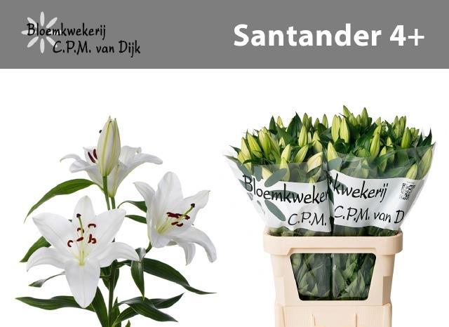 <h4>Li Or Santander</h4>