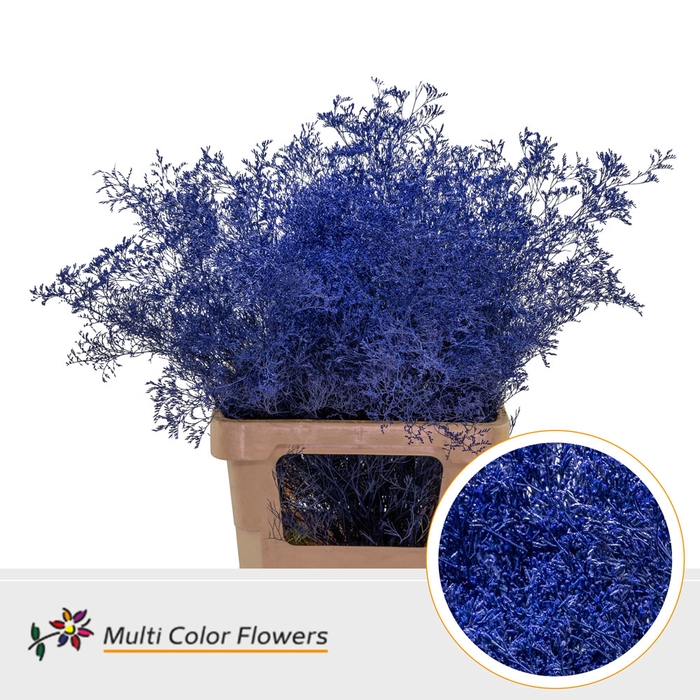 <h4>Limonium Beltaard Blauw donker</h4>