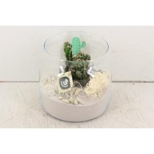 arr. JS - Glas met cactus 338/3