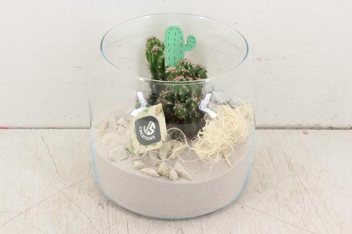 <h4>arr. JS - Glas met cactus 338/3</h4>