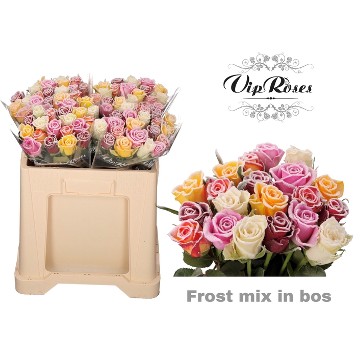 <h4>R GR FROST MIX IN BOS</h4>