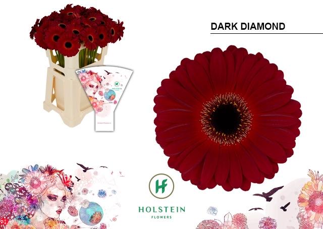 <h4>GE GR hoes Dark Diamond</h4>