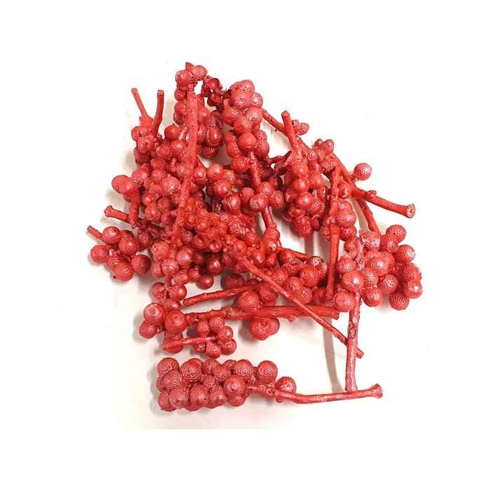 <h4>Acorn bunch 250gr in poly Pearl Red</h4>