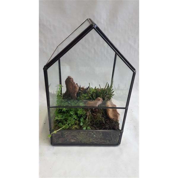 <h4>GHK14NAT Terrarium glashouse succulentmix</h4>