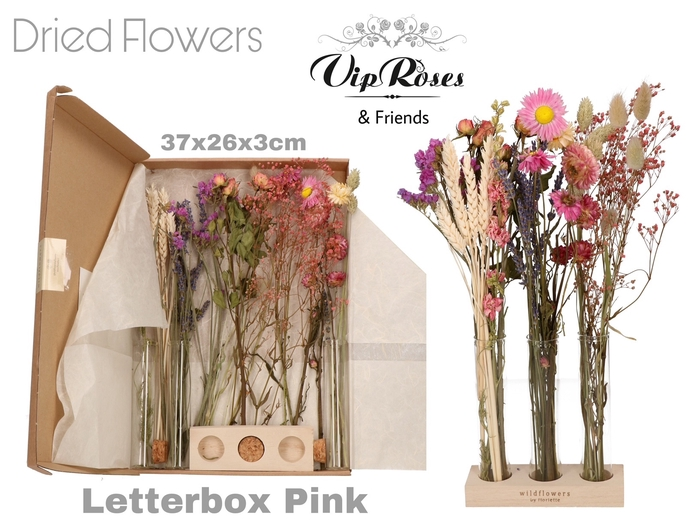 DRIED LETTERBOX PINK TUBES