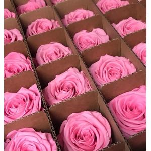 Bulk rose stabi pink
