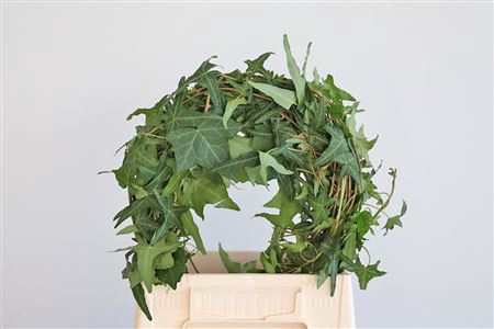 <h4>Dec Hedera Ranken Green</h4>