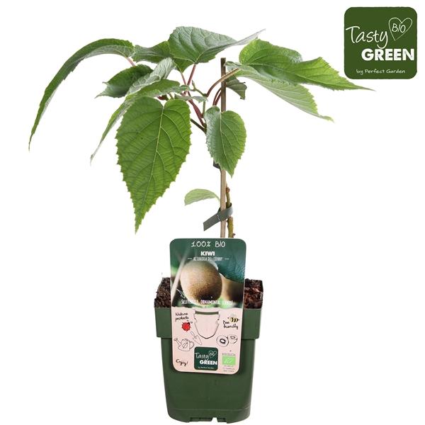 <h4>Actinidia deliciosa Jenny - Self-fertile - Tasty Green biologisch</h4>