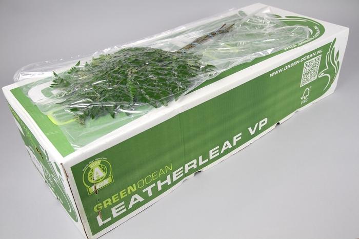 <h4>Ledervaren Extra VP Green Ocean</h4>