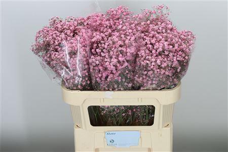 <h4>Gyps Klbh Xlence New Pink</h4>