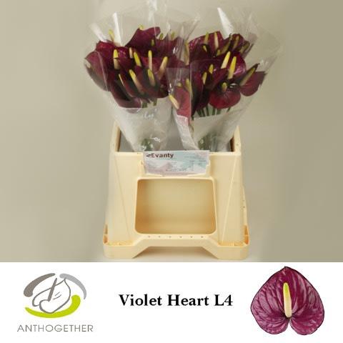 <h4>ANTH A VIOLET HEART 40 L4.</h4>