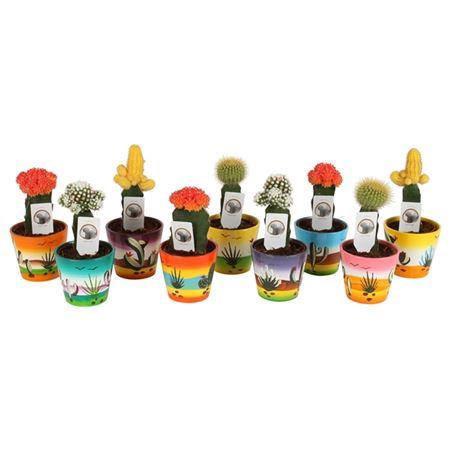 <h4>Cactus A4850000 Gymno Gemengd Keramiek Mexico</h4>