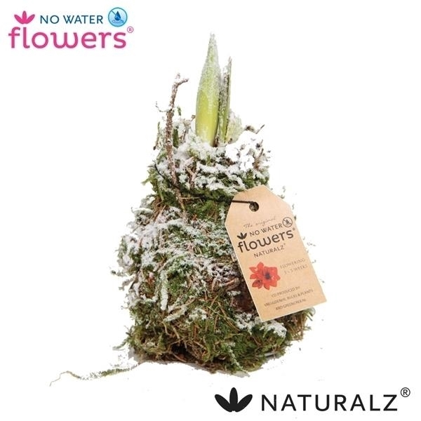 <h4>No Water Flowers Waxz® Naturalz Moss snow</h4>
