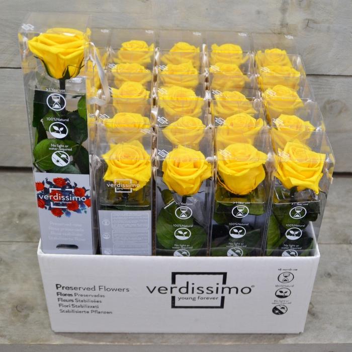 <h4>R PR Amorosa Mini Yellow</h4>