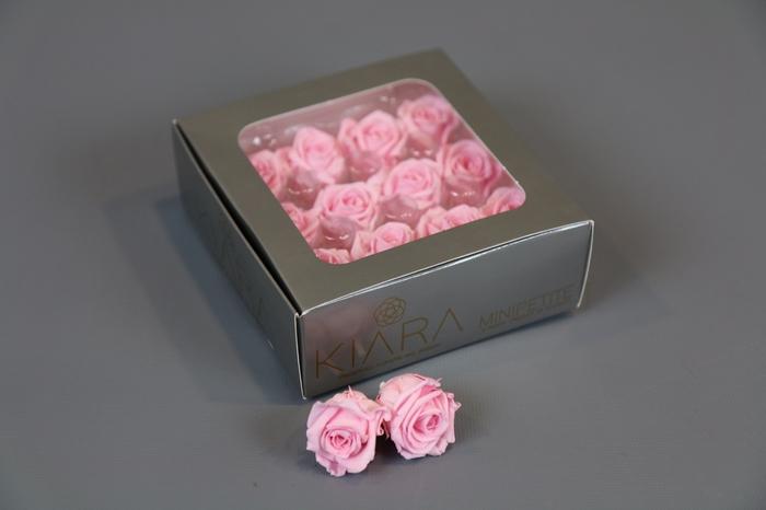 <h4>Rosa Preserved Bridal Pink Mini Petite</h4>