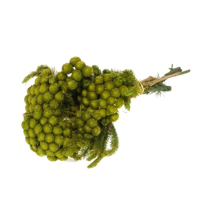 <h4>Albiflora preserved SB yellow natural</h4>