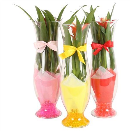 <h4>Opm Yr02g101 Guzm Glas Small</h4>