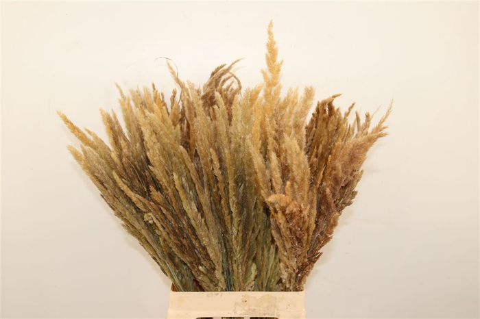 <h4>Dried Stipa Feather</h4>