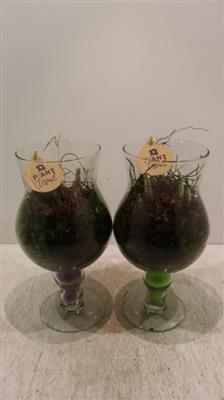 <h4>7450 Champgne Glas X6</h4>