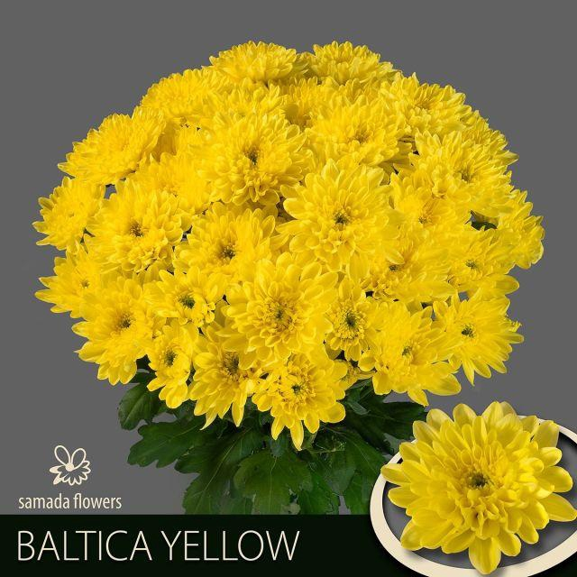 <h4>CHR T BALTICA YELLOW</h4>
